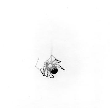 20121018003210-arthropoda-01