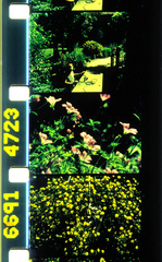 20121022015349-habitat_by_rose_lowder_