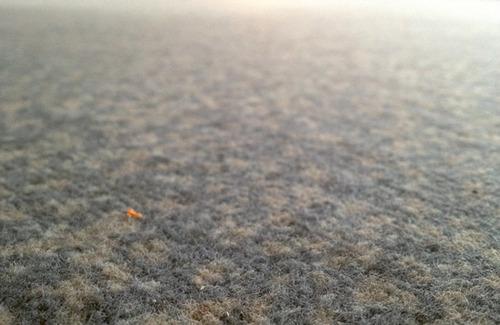 20121024011253-teppich01_rgb