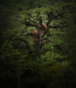 20121102152444-treeb_10_copy