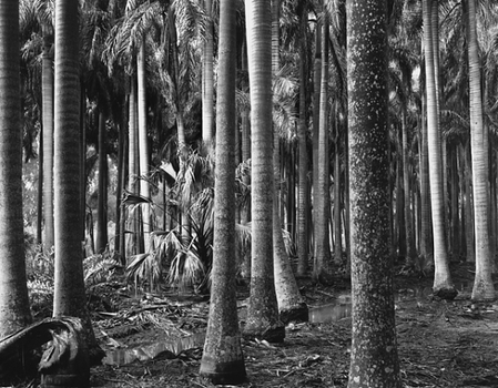 20121103064910-bw_florida_trees
