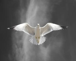 20121106203556-flight_lesson_a