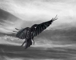 20121106203955-tempest_crow