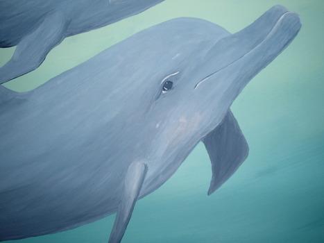 20121114071416-dolphinmom_best_res