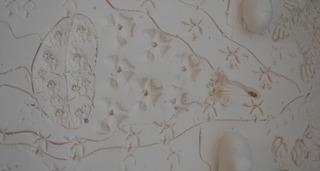 20121124014131-clay