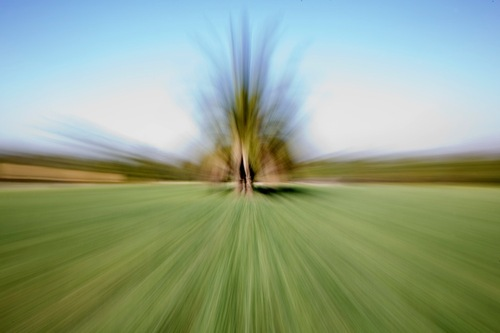 20121124051119-palm_tree__eitan_vitkon_luminarte_gallery