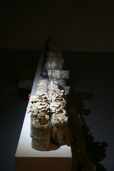 20121125095651-pei_li-healing_mushroom__installation_view__2012_
