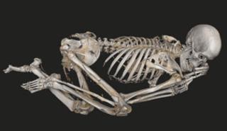 20121130124658-skeleton_304x176