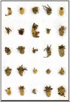 20121201151808-aardappel20001web