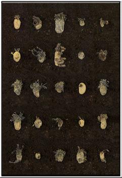 20121201152001-aardappel30001web