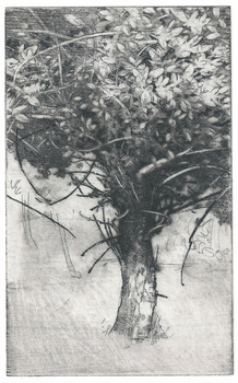 20121205195845-larkin_tree_study
