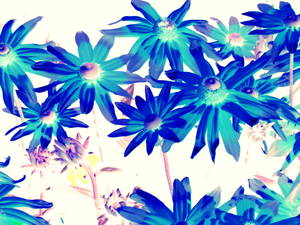 20121211174231-blue_flowers