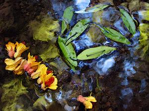 20121211233558-waterflower