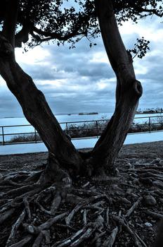 20121214140730-root_tree