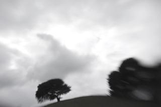 20121219154704-treeonthehill_360x240