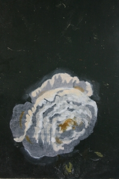 20121220055238-t516_1902-kate_daw__white_flower__from_the_series_in_between_days___2011__oil_on_blackboard__22_x_32_cm__courtesy_of_the_artist_and_sarah_scout__melbourne