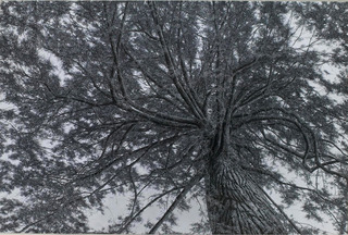 20130104170430-ellen-wagener-lawrence-tree-96_