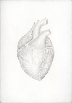 20130104225004-study-of-a-human-heart1-300dpi