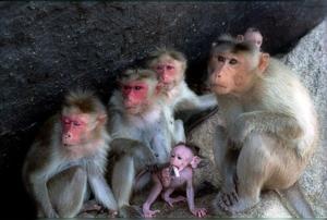 Monkey_family-1_