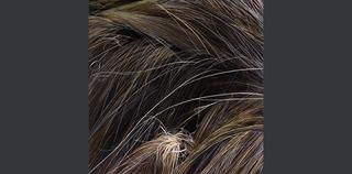 20130114033006-grasslands-iii