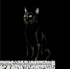20130117163854-image01