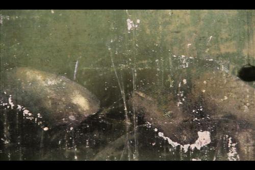 20130119234736-forrestwalls3