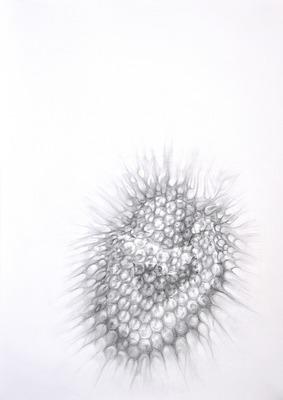 20130123150557-n_untitled_30x70cm