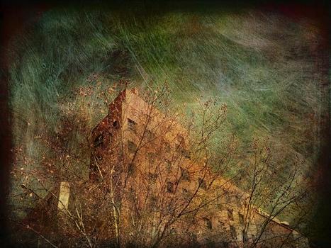 20130125113046-urban_trees_14