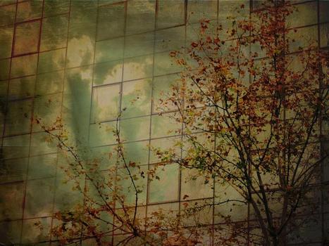 20130125113305-urban_trees_11