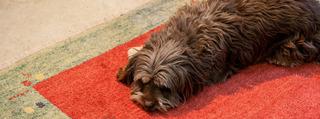20130126024138-dog