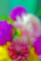 20130130195149-dahlia___mum_no