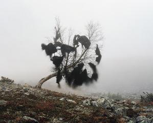 20130131235219-winds_nest