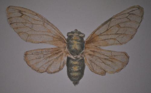 20130206172843-cicada