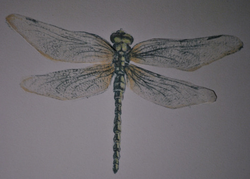 20130206172918-dragonfly1