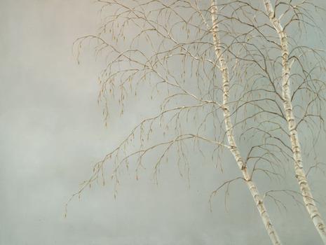 20130206224949-silverbirchesweb
