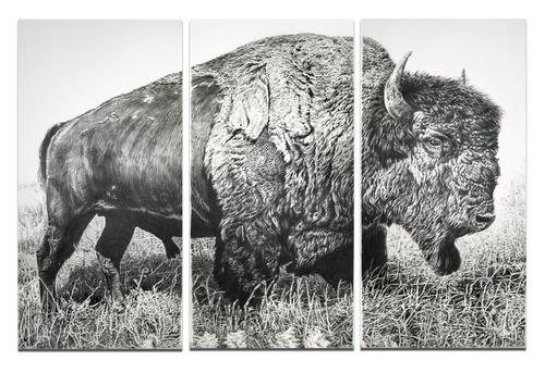 20130207164854-bison_final_final_sm
