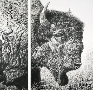 20130207165214-bison_final_final_head_sm