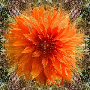 20130207180108-chrisanthemum