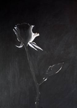 20130210183008-rose