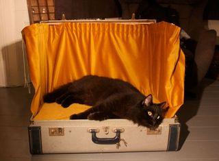 20130211172015-black-cat-set_500_367_80_s_c1