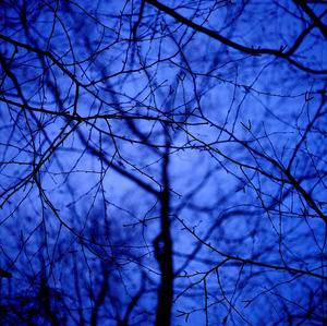 20130212233812-blue_tree__2