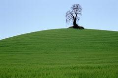 20130213000832-vineyard_tree