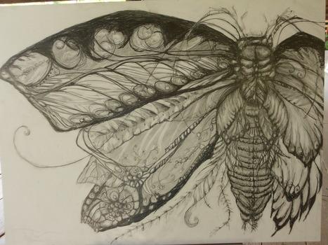 20130213212900-beetle-moth