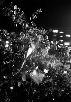 050111_hk_nightflowers