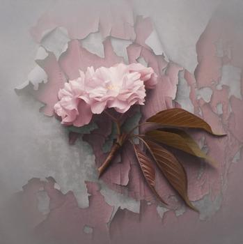 20130216171130-blossom5