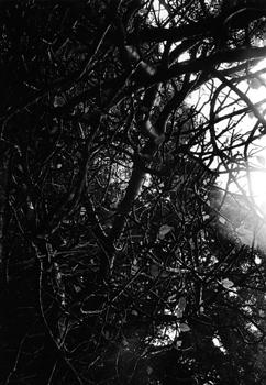 071113_azo_branches