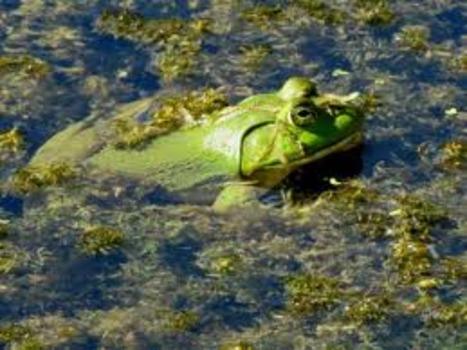 20130217051836-frog