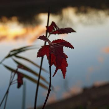 20130220140412-leaf-16x16