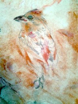 20130220184536-bird_20130129_141505