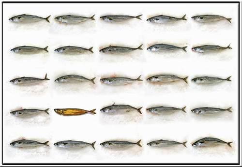 20130224195516-makreel20001
